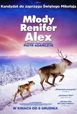Młody renifer Alex / Ailo: Une odyssée en Laponie