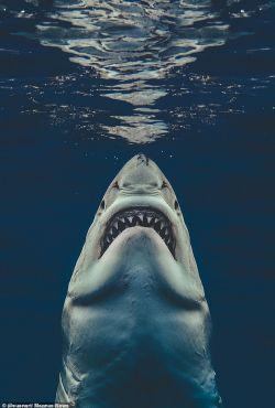 Potwory z mrocznych otchłani / What the Shark?