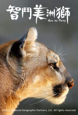Człowiek kontra puma / Man vs. Puma