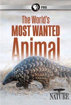 Łuskowce. Niezwykłe i pożądane / Pangolins The World's Most Wanted Animal