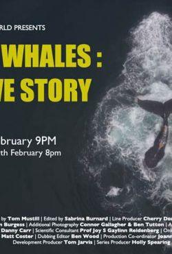 Humbaki - historia detektywistyczna / Humpback Whales: A Detective Story