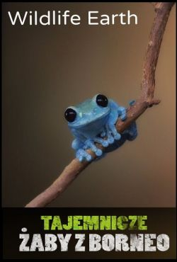 Tajemnicze żaby z Borneo / When Frogs Dance and Sing: The Mysterious Amphibians of Borneo