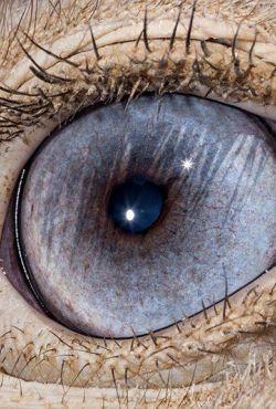 Jak widzą zwierzęta / Inside Nature's Eyes